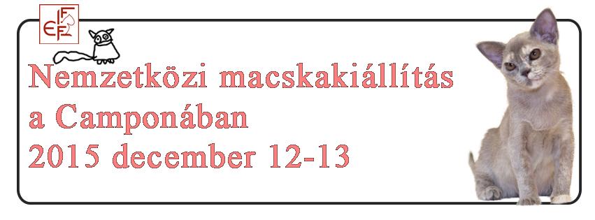 2015_campona_macskakiallitas.png.558cb6d